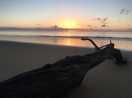 Sunrise Mission Beach Driftwood